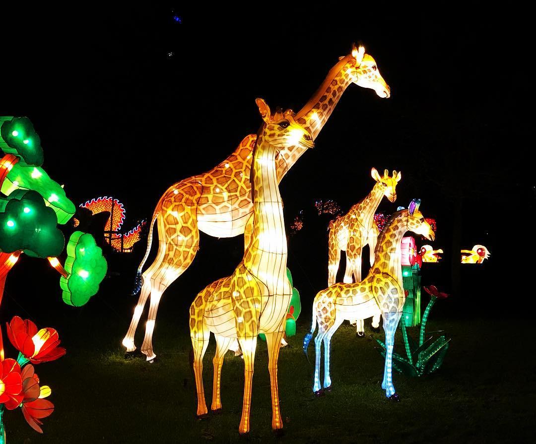 Kölner Zoo China Light Festival